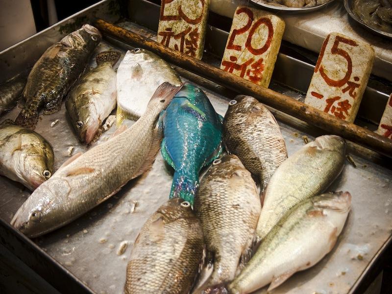 pesce_radioattivo_giappone_iene_sushi