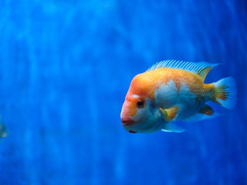 adattamento dei pesci