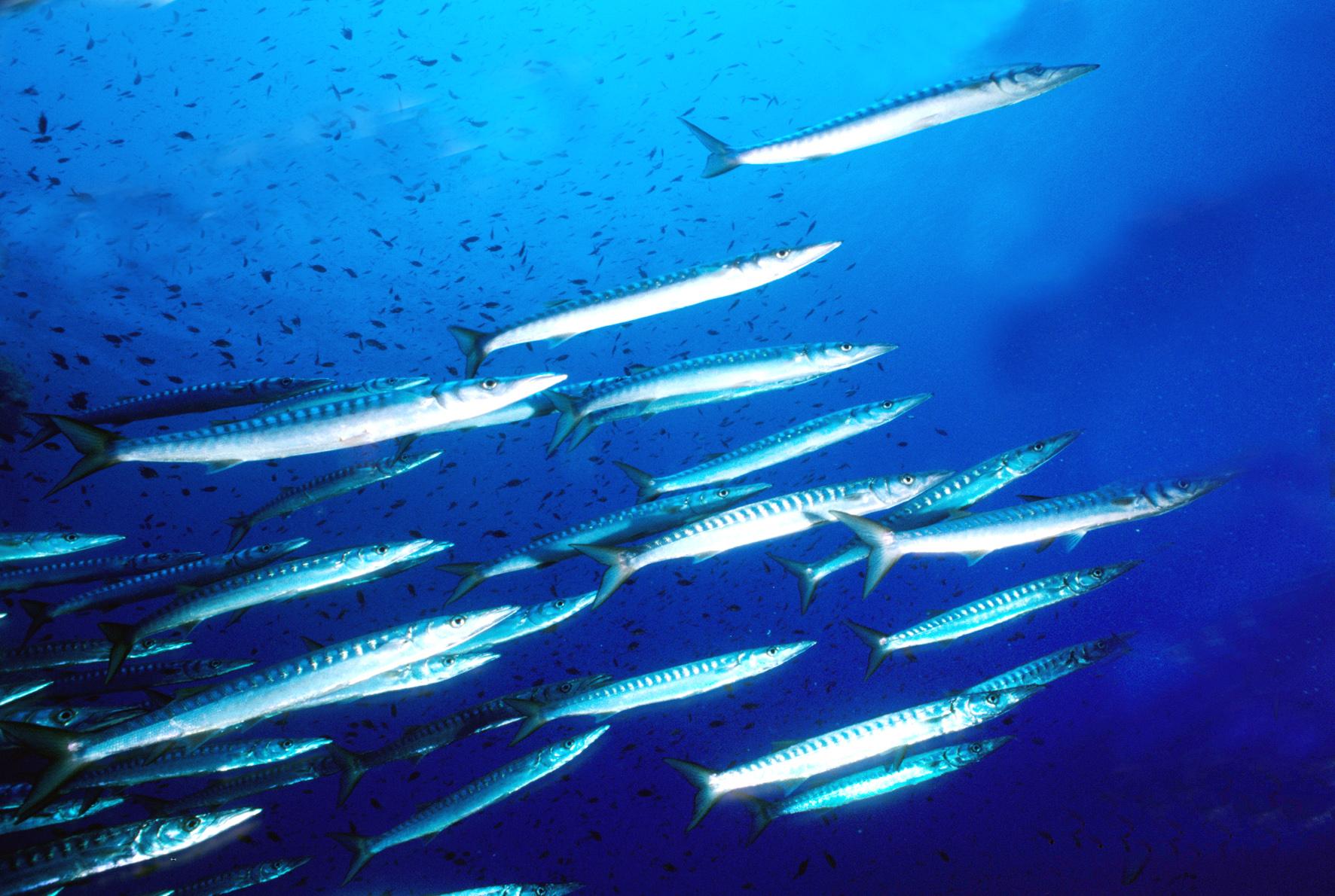 In aumento il consumo di pesce: pro e contro