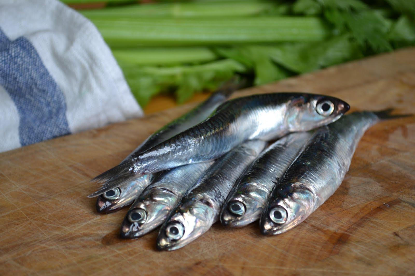 Il pesce di stagione a Settembre
