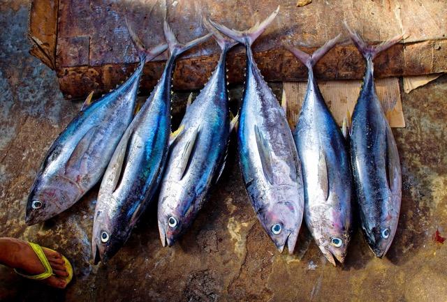Il pesce di stagione in autunno